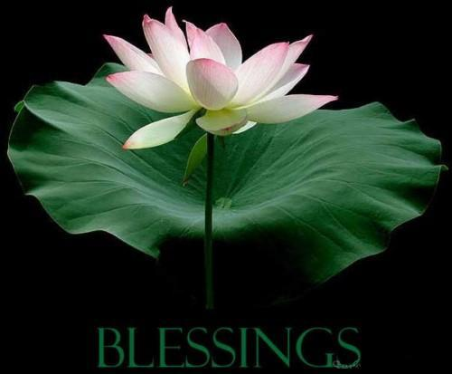 Flower blessings coolgraphic