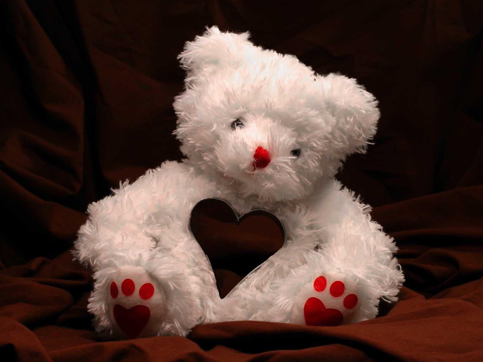 Valentine's teddy bear wallpapers