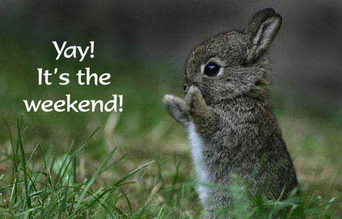 Image result for it's the weekend!