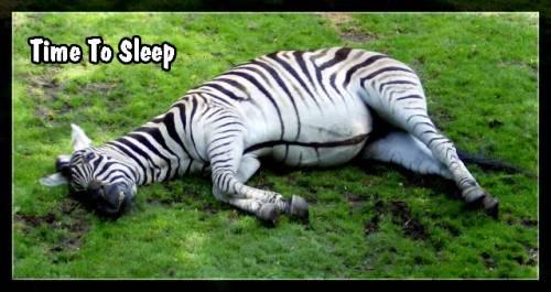 """Funny Zebras Pictures Zebra/"""">funny Zebra"""