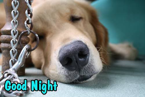Dogs fun pictures images graphics comments scraps 107 pictures cute dog good night graphic altavistaventures Images
