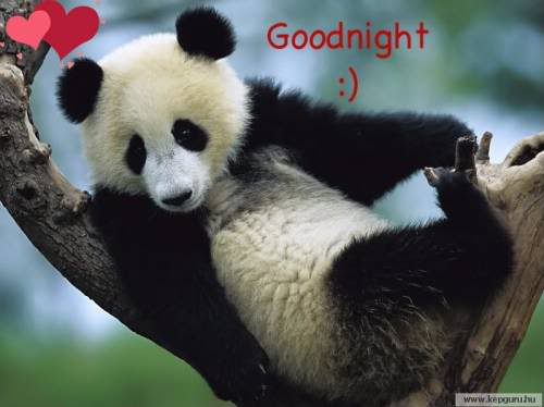 Image result for funny animals good night
