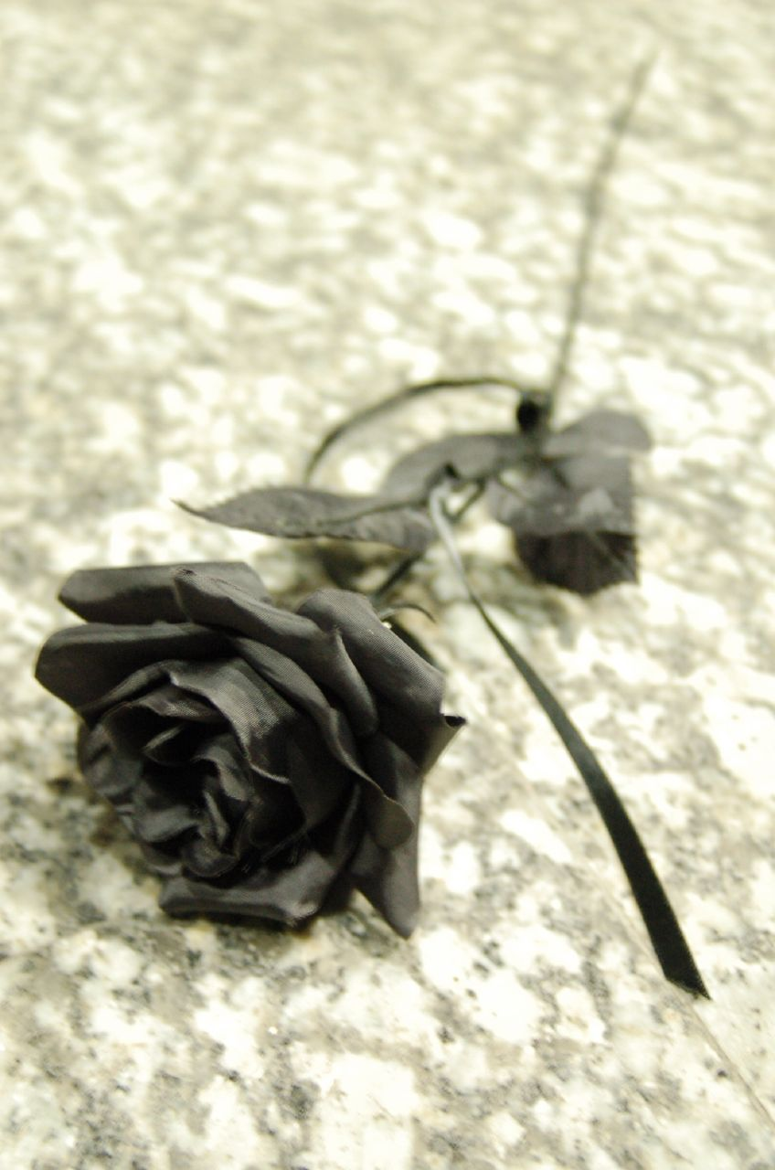 Black Rose Image for Myspace