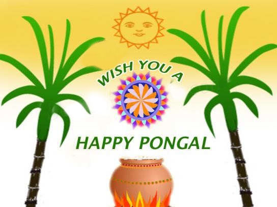 Happy Pongal Wishes for You