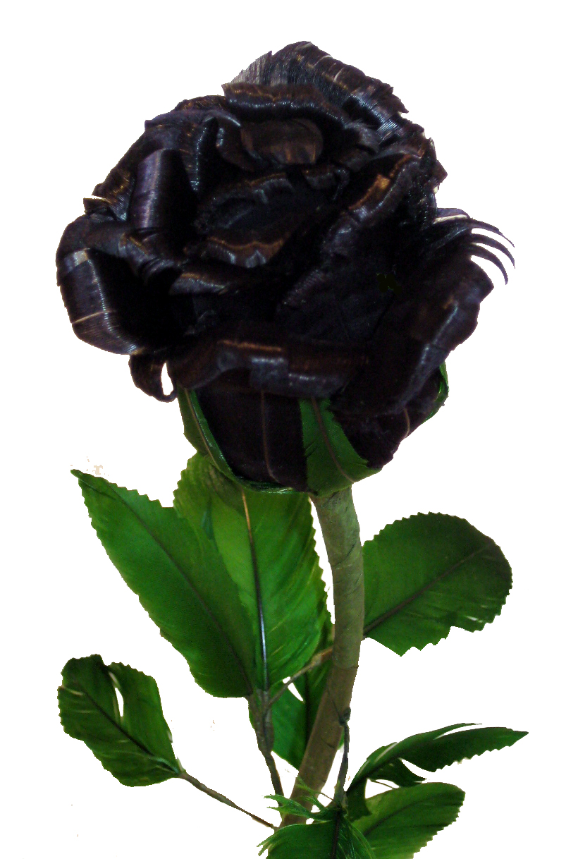 Picture of Black Rose