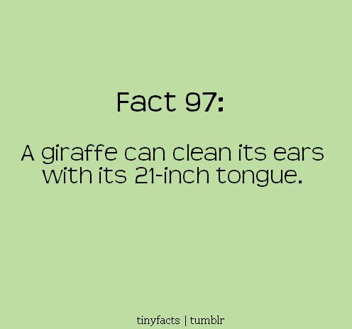 A giraffe can clean its ears with its 21-inch tongue. | Fact Quote