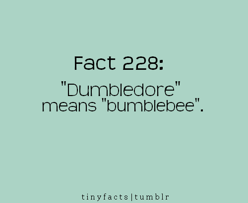 Fact Quote : 'Dumbledore' means 'bumblebee'.