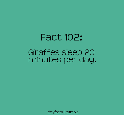 Giraffe sleeps 20 Minutes per day. - Fact Quote