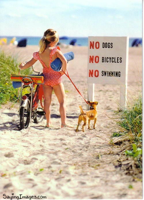 Funny Quote : No Dog No Bicycle No Swimming