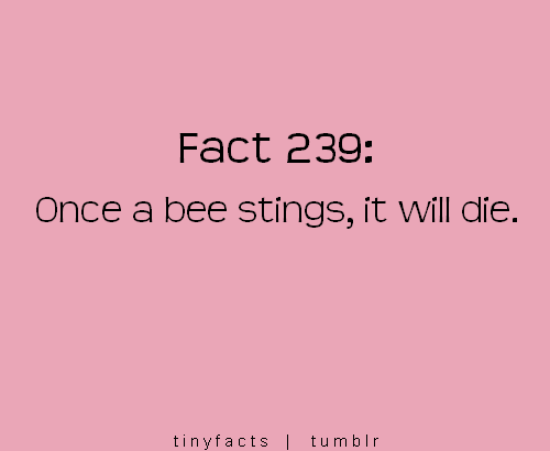 Fact Quote ~ Bee sting