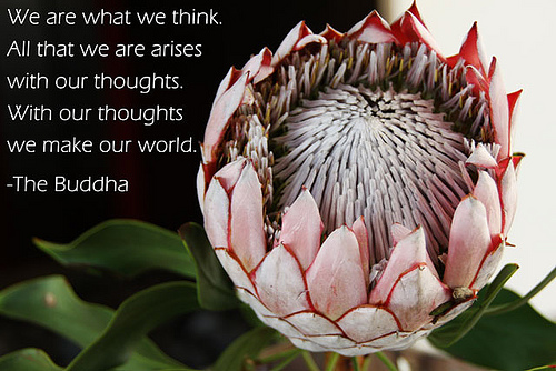 Buddhist Quote - We are what we think.