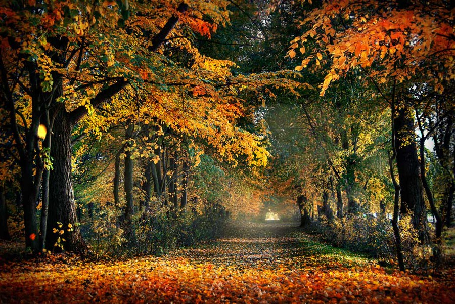 Nice Autumn Image for Friendster