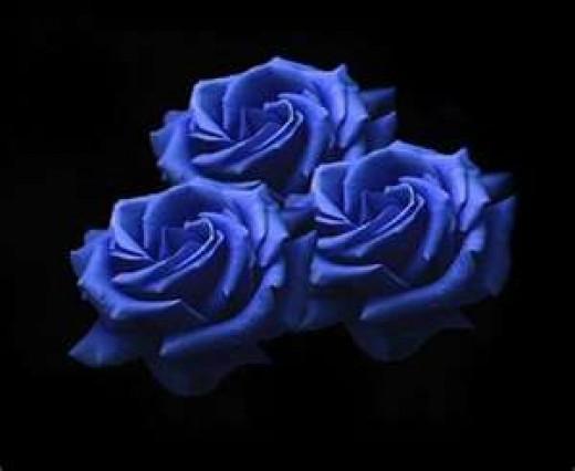 Blue Roses Image for hi5