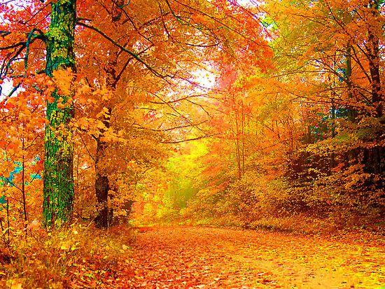 Beautiful Autumn Graphic for Orkut