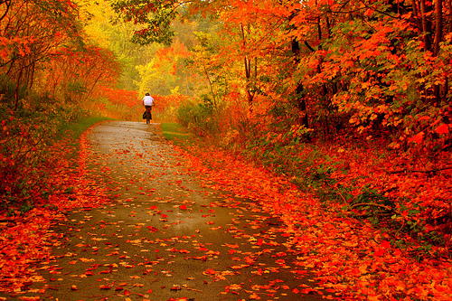 Beautiful Autumn Image for Friendster