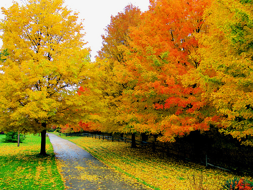 Awesome Autumn Trees for Fb Share