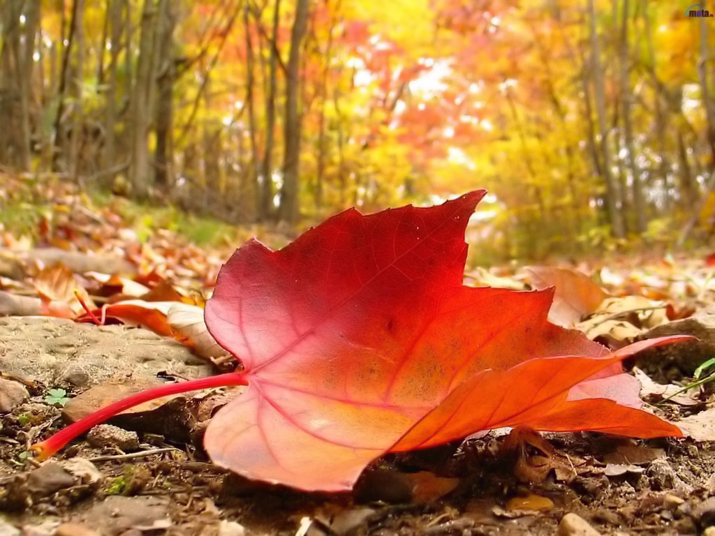 Autumn Falling Leaf Picture