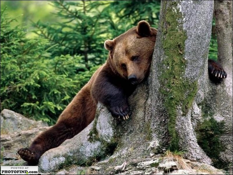 Funny Bear Huging Picture
