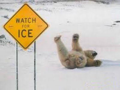 Watch for Ice Funny Bear Picture