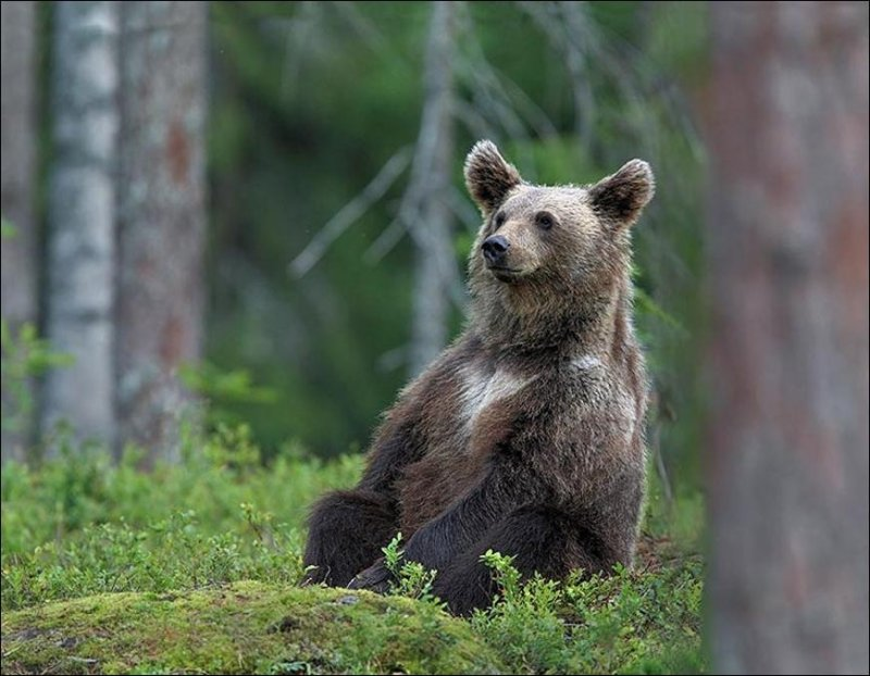 Funny Bear Watching Picture for Fb Share