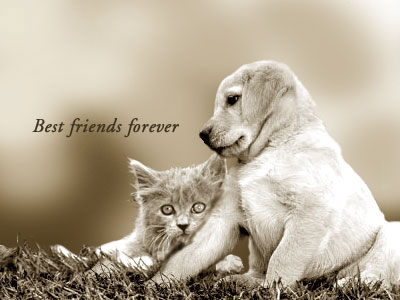 Best Friends Forever Animals Picture