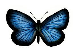 Coloured Butterfly Graphic for Facebook Sharing