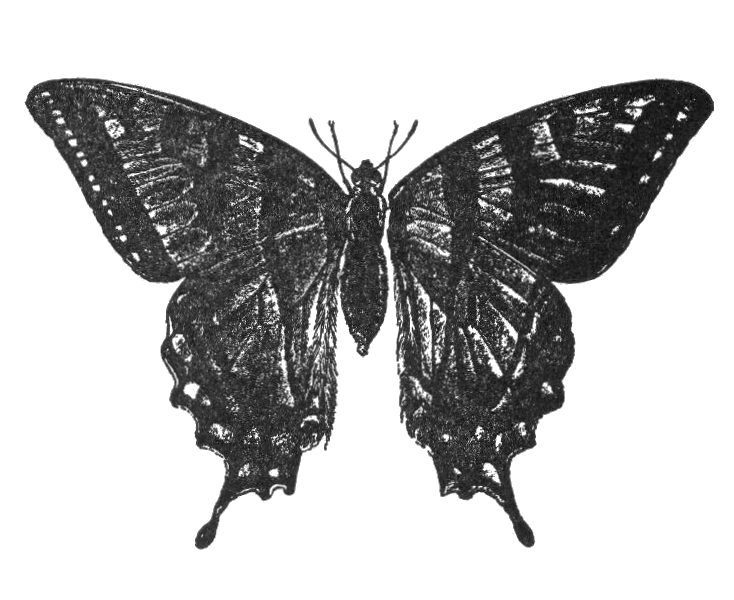 Black Butterfly Graphic for Fb Share