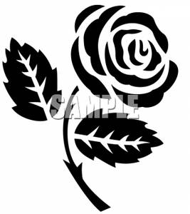 Black Rose Graphic for Hi5