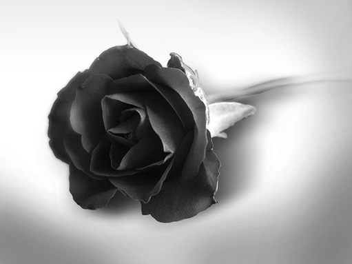 Black Rose Graphic for Fb Share