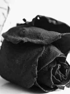 A Black Rose for you My best Friend