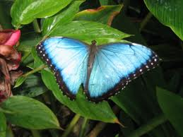 Blue Coloured Butterlfy Photo for Orkut
