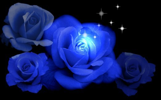 Nice Blue Rose Picture for Orkut