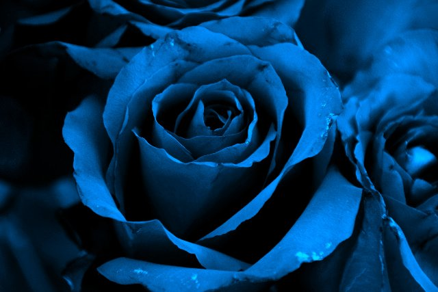 Blue Rose Graphic for Friendster