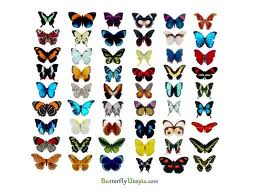 Different Butterfly Pictures