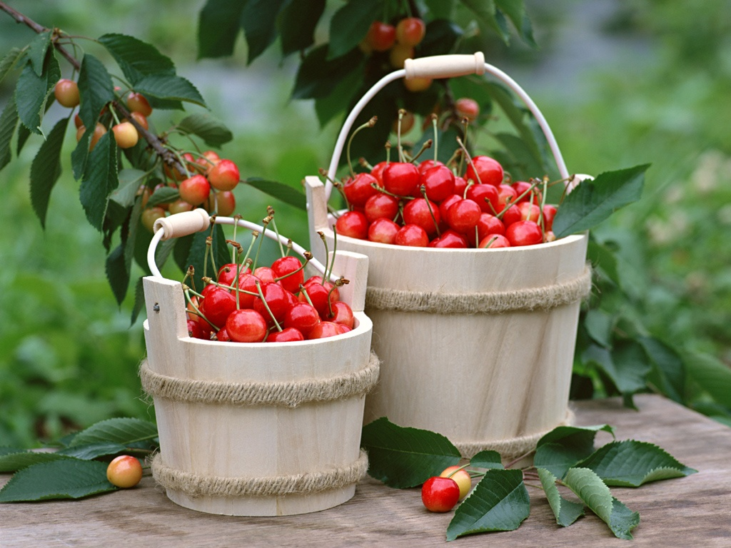 http://www.graphics99.com/wp-content/uploads/2012/06/cherry-wallcoo-in-basket.jpg