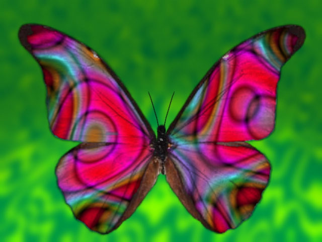 Beautiful Colourful Butterfly Image for Orkut