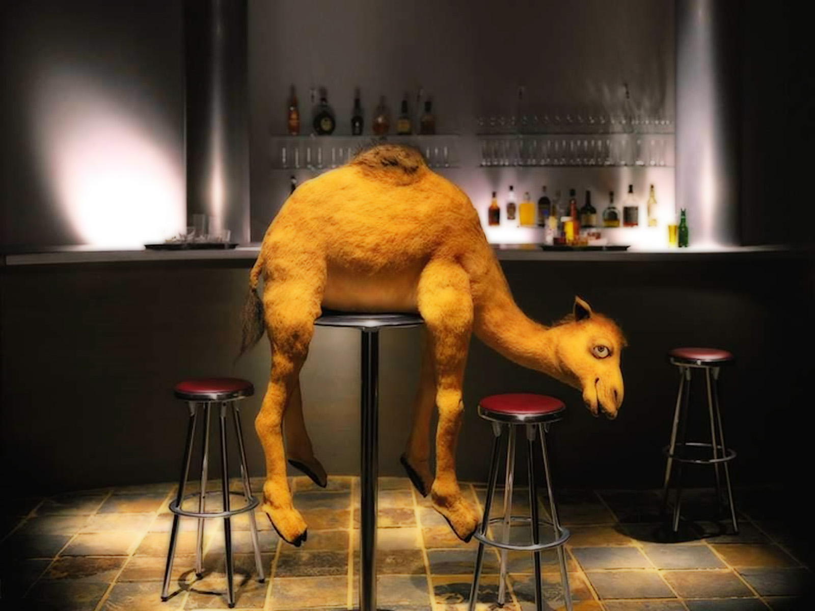 Funny Camel Drunk Picture