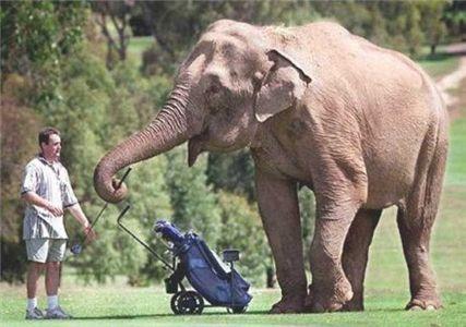 Funny Elephant doing  work