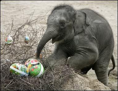 Elephant Easter