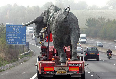 Elephant Funny Picture