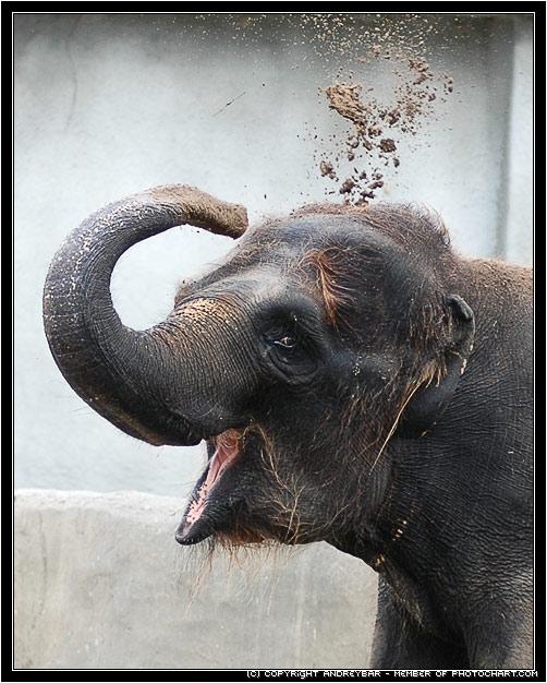Elephant play sand