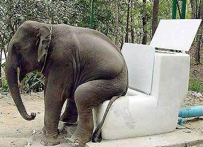 Funny Elephant Toilet Picture for Orkut