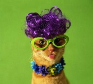 Funny Fashionable Cat