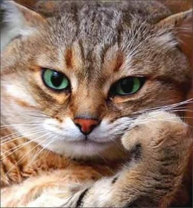 Funny Cat Attitude Picture for Fb Share