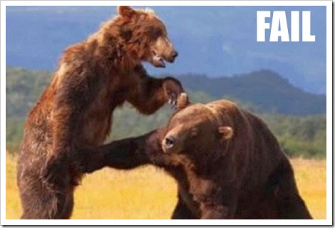 Funny Bear Fail Picture