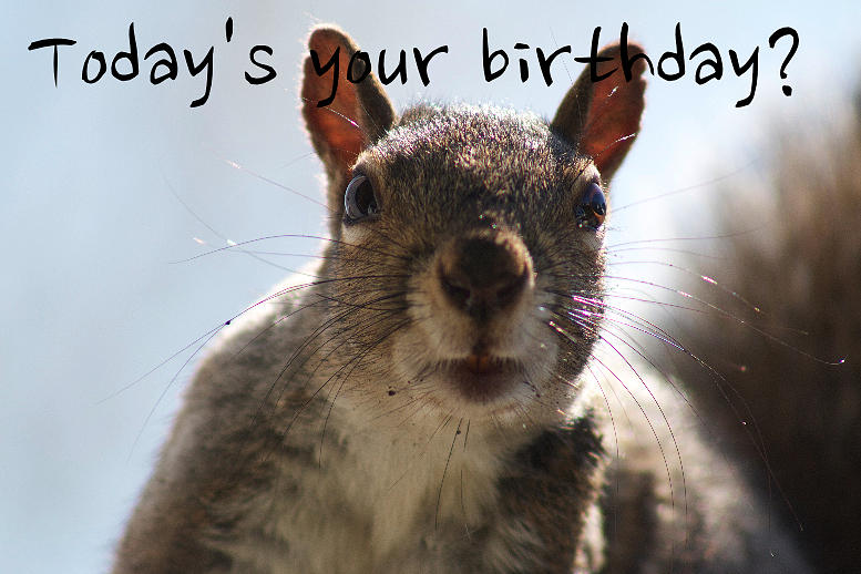 Todays Your Birthday? Funny Birthday Picture