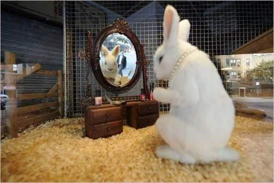 Funny Rabbit Picture