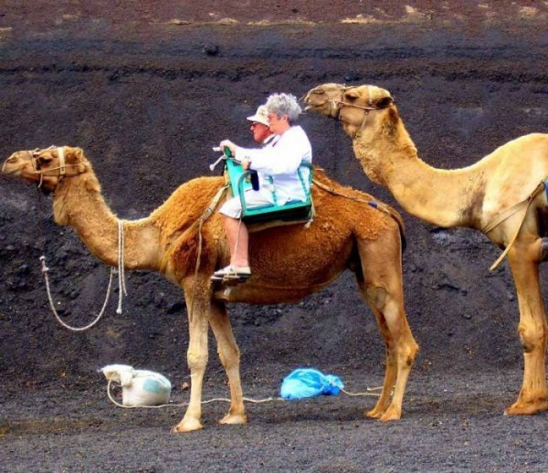 Funny Camel Ride Picture for Friendster