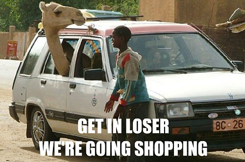 Funny Camel Inside the Car Picture for Fb Share