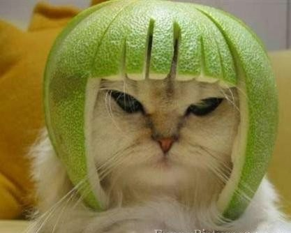 Funny Cat Ready For The Battle